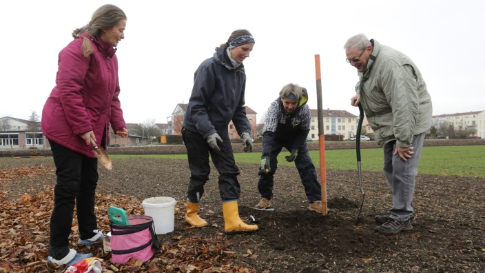 Erste Zwiebeln gesetzt: Erste Arbeiten der Urban-Gardening-Gruppe in Eching auf ihrem Grundstück: (von links) Monika Floh, Corinna Enßlin, Barbara Peschke und Werner Ruf.