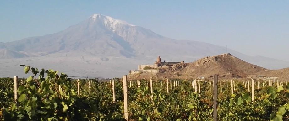Weinanbau unterhalb des Ararat in Armenien