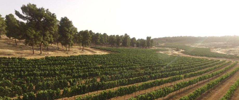 Weinanbau in Israel