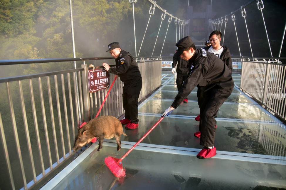 Security officers help a wild pig to leave the glass bridge and return to the wild, at the Gulongxia scenic spot in Qingyuan
