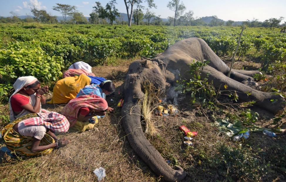 Women pray next to the carcass of a male elephant, who according to forest officials succumbed to injuries after a fight with another elephant Monday night, at a tea garden in Nagaon