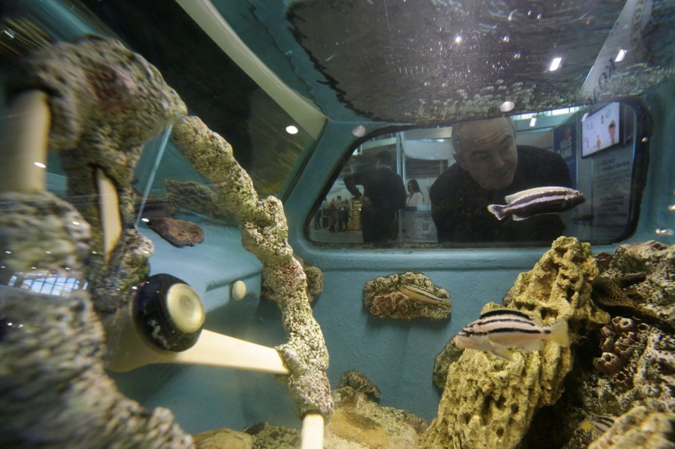 A visitor looks at a retro car converted into an aquarium during an exhibition in St. Petersburg