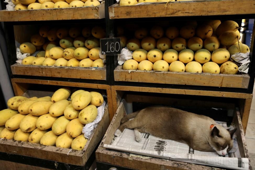 Cat sleeps in a box in a mango shop in Bangkok