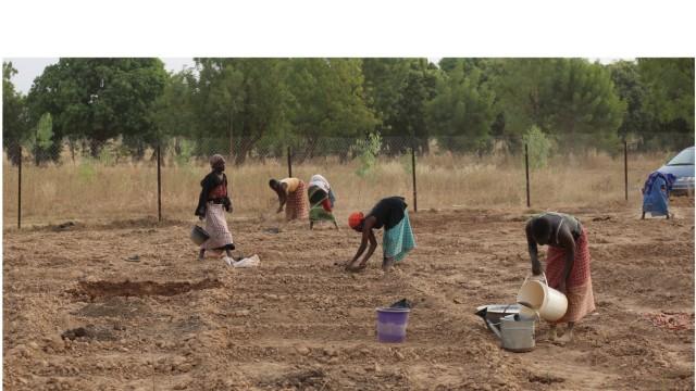 Projekt in Burkina Faso: Aus der Initiative einzelner Gärtnerinnen sind inzwischen Gemeinschaftsprojekte gewachsen, die Frauen in den Dörfern gemeinsam bewirtschaften.