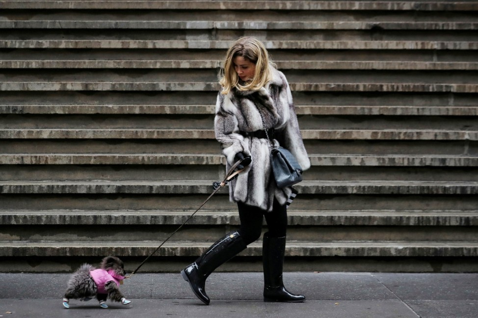 A woman walks her dog on Wall St. during a cold day in New York