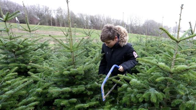 Tipps für ein nachhaltiges Fest: Wer den Christbaum selbst aus der Plantage holt, wie hier Philipp am Weihenstephaner Ring in Freising, der spart zumindest den Antransport der Bäume aus fernen Ländern. Und Spaß macht es auch noch.