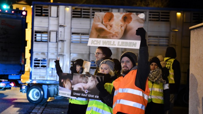 Animal Save Tierschutz Schlachthof