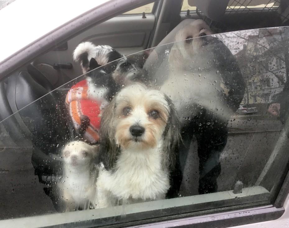 Neun Hunde im Auto - Polizei stoppt 56-J·hrigen in Heilbronn