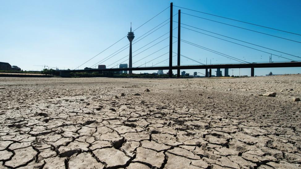 Sommerhitze - Rhein in Düsseldorf
