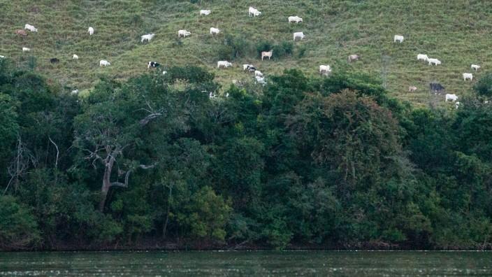 Grüne Lunge der Erde: An vielen Stellen im Amazonas-Regenwald haben Farmer wie hier im brasilianischen Bundesstaat Pará Viehweiden angelegt.