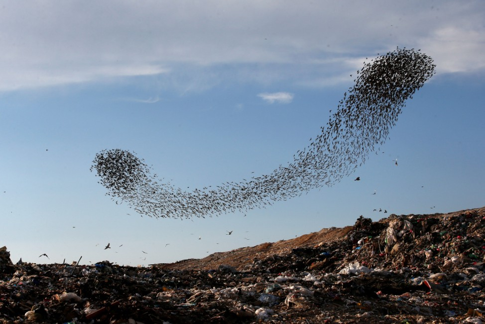 A murmuration of migrating starlings fly in a group above a waste facility near the city of Rahat, southern Israel