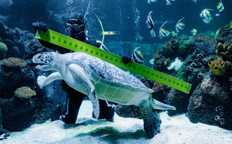 Fischinventur im 'Sea Life'