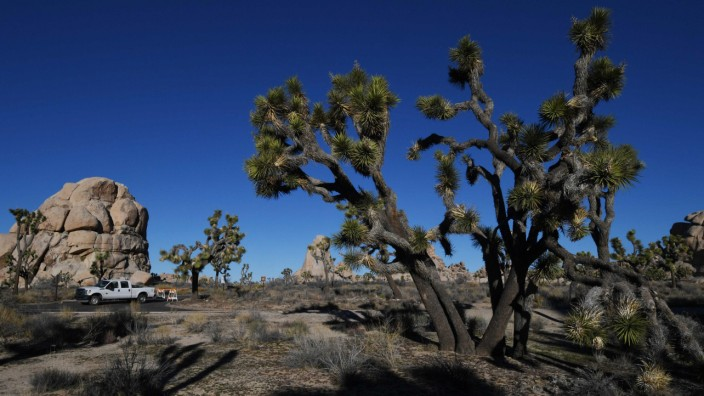 Effect of government shutdown at Joshua Tree National Park
