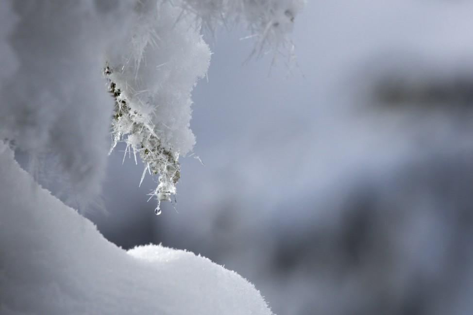 Schneekristalle an einem Baum