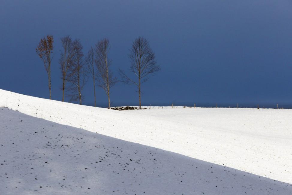 Verschneite Landschaft mit Bäumen