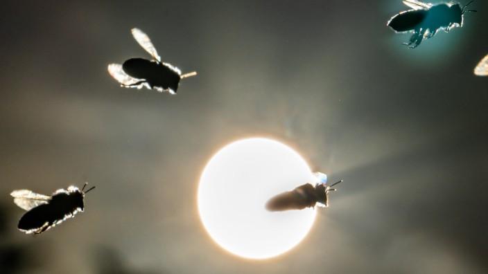 Volksbegehren Artenvielfalt Bienen