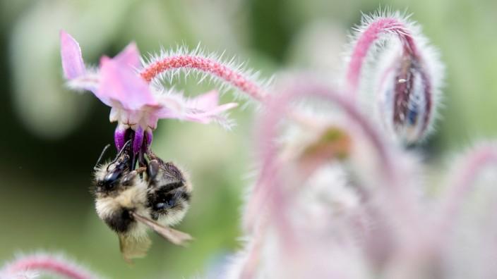 Wildbienen-Projekt in der Wilhelma