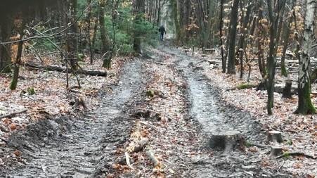 Baumfällungen im Fürstenrieder Wald