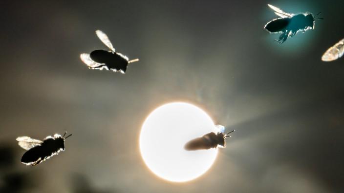 """Volksbegehren ´Artenvielfalt - Rettet die Bienen"""""""