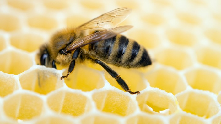 Honigproduktion