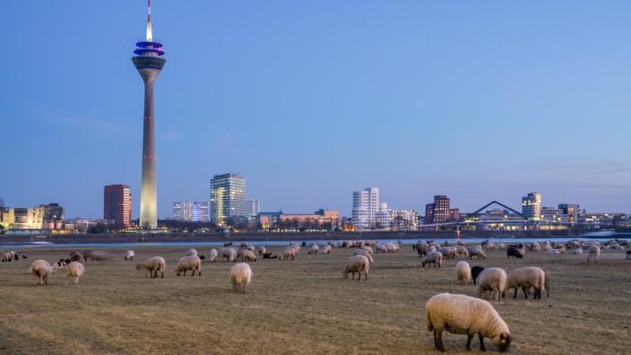 Düsseldorf skyline at dusk