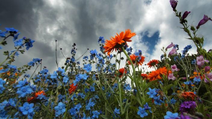dunkle Gewitterwolken und Regenwolken über einer Sommerwiese mit blühenden Wiesenblumen in München