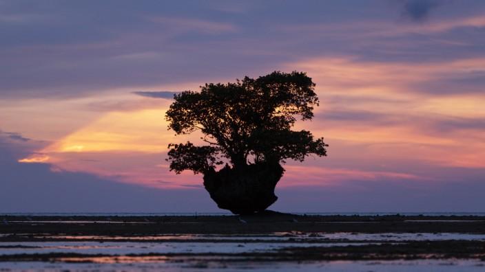 """Amerikanische Literatur: Auf einem Südsee-Atoll glaubt in Hanya Yanagiharas Debütroman """"Das Volk der Bäume"""" der Arzt Norton Perina ein Mittel gegen den Tod gefunden zu haben. Aber auf den Helden wartet nicht der Ruhm, sondern der Absturz."""