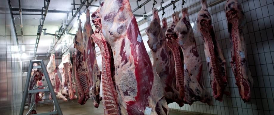 Ausgeblutete Rinder