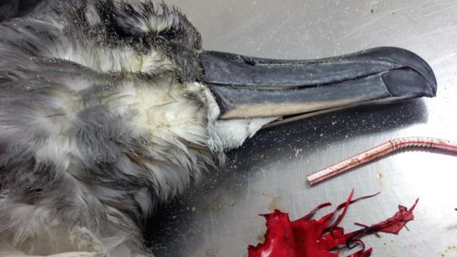 Toter Albatros