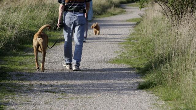 Spaziergänger mit Hund , 2010
