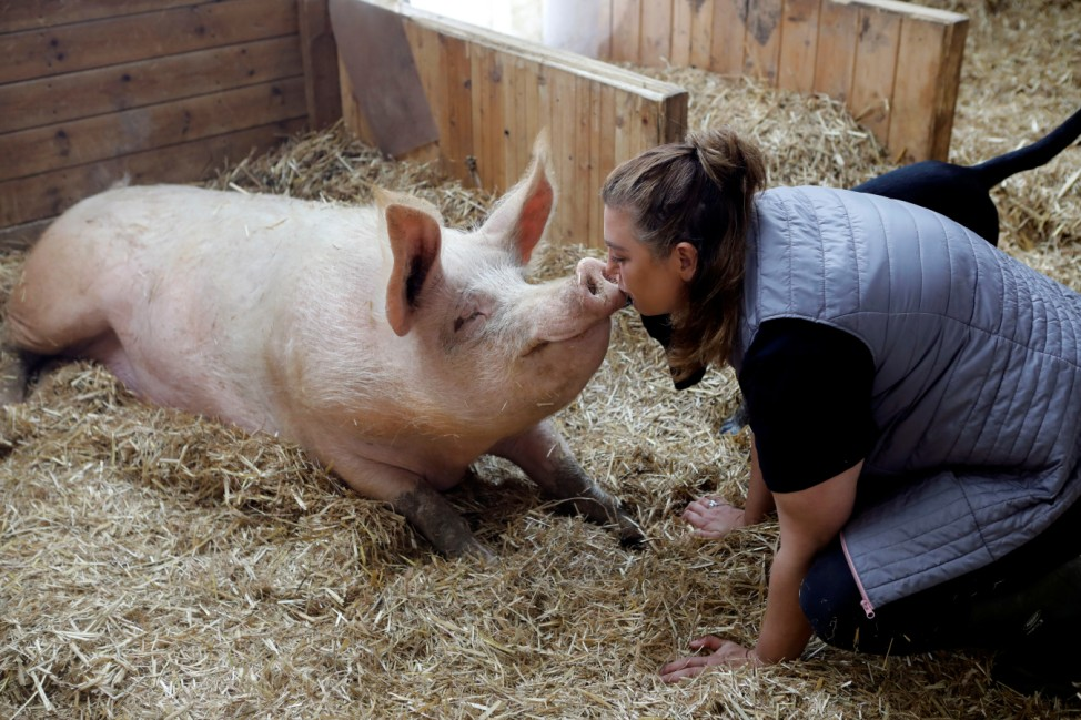 Meital Ben Ari, a co-founder of 'Freedom Farm' kisses Omri a pig, in his sty at the farm, which serves as a refuge for mostly disabled animals in Moshav Olesh, Israel