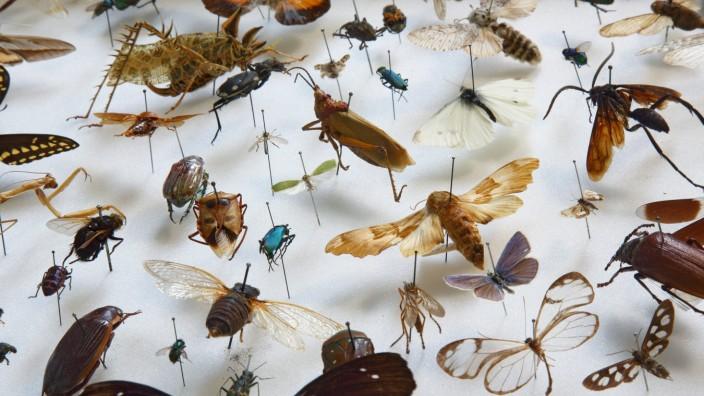 Eine Vielfalt von Insekten aus der Sammlung des Museums fuer Naturkunde in Berlin Foto vom 20 02 20