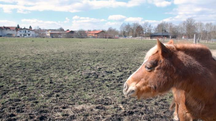 Gemeinde kauft Gelände der Pferdekoppel; Seefeld kauft Grund
