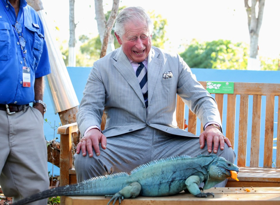 Britain's Prince Charles laughs with Peter, a blue iguana, at the Queen Elizabeth II Royal Botanic Park in Grand Cayman, Cayman Islands