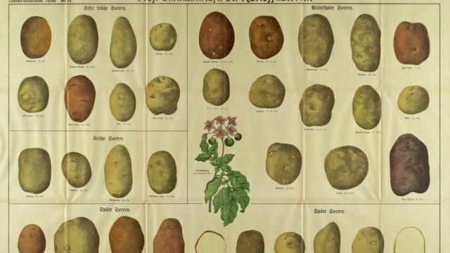 Tafel der Kartoffelsorten / Graser?s