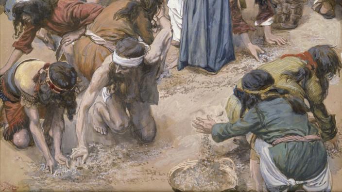 Bibel-Geschichte: Die Israeliten beim Einsammeln der wundersamen Speise: Gemälde aus dem 19. Jahrhundert.