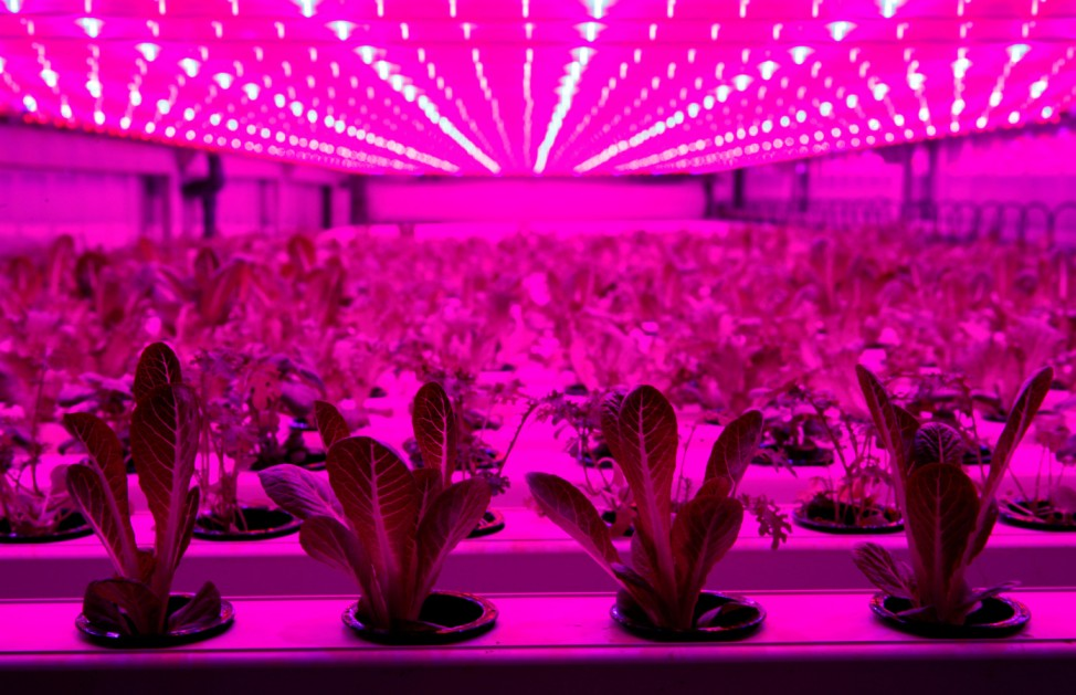IKEA to test container farming technologies part of their sustainability initiative 'One Home, One Planet\