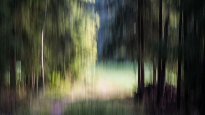 """Fotoclub Fürstenfeldbruck Rainald Reb / """"Zur Lichtung"""" / Verfremdung durch Einsatz der Wischertechnik beim Fotografieren im Wald (keine Computerbearbeitung);"""