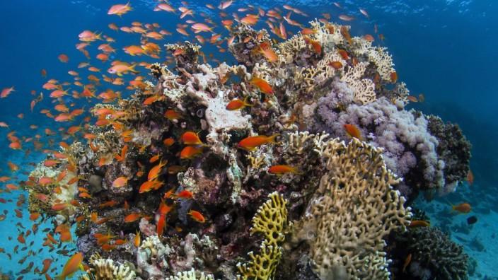 Korallenriff - Great Barrier Reef