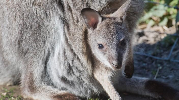 Zoo in Stralsund präsentiert zu Ostern Tier-Nachwuchs
