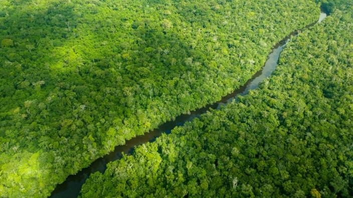 600 Forscher mahnenEU: Mehr Druck auf Brasilien bei Umweltschutz
