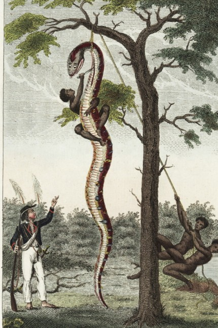 African slaves skinning a boa constrictor on a plantation in Surinam.