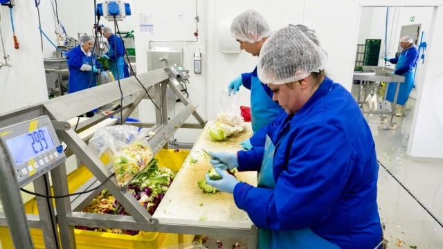 Regenbogen Arbeit - Gemüseverarbeitung
