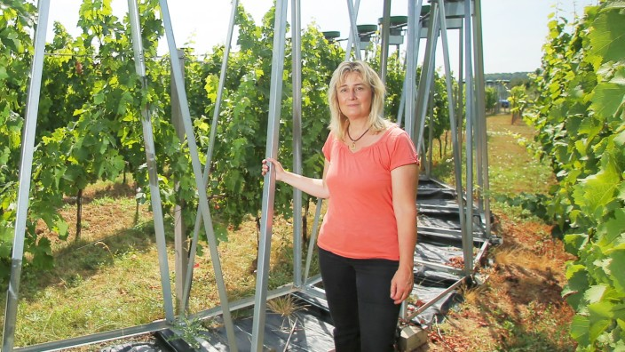 Freiland-Forschung - Wein und CO2