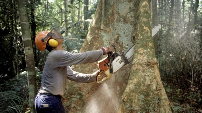 IPBES-Weltbericht: Menschheit tilgt die Natur von der Erde