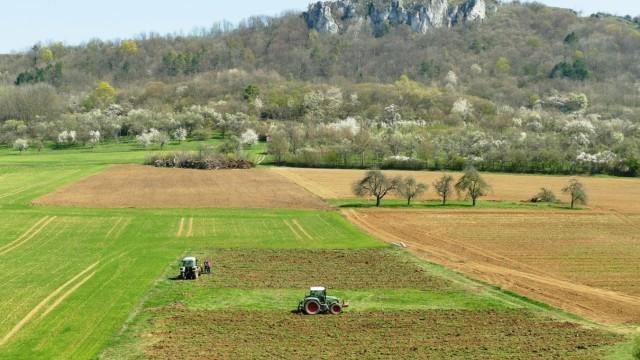 Umweltschutz in Bayern: Inzwischen sind die Bäume gefällt, aus der Wiese ist ein Acker geworden.