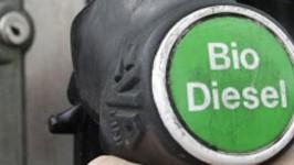 Biodiesel, AP