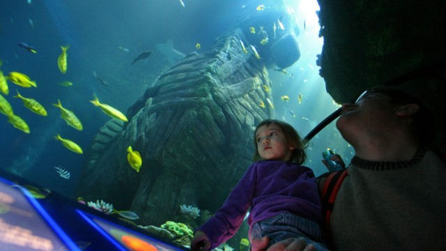 Sea-Life-Aquarium, 2008