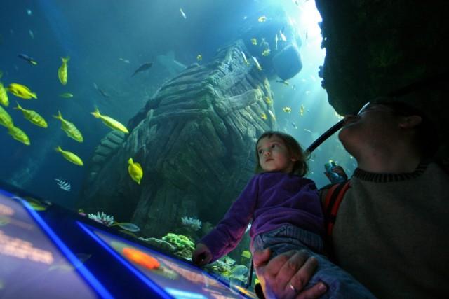 Sea-Life-Aquarium, 2008