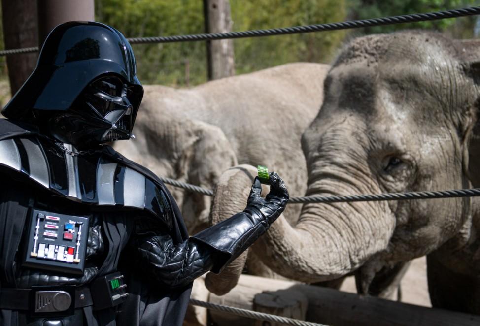Ein als Darth Vader verkleideter Besucher füttert im Allwetterzoo in Münster einen Elefanten.